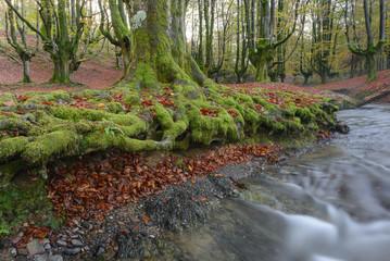 Otzarreta beech forest, Gorbea Natural Park, Vizcaya, Spain