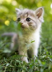 little kitten is walking in green grass outdoors