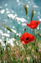 Poppy flowers against water
