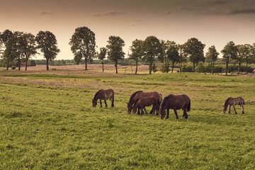 Aga Herd search photos by aga
