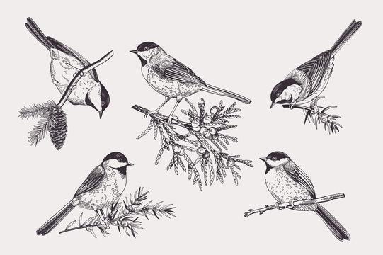 Set of birds.