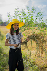 Portrait of beautiful girl harvesting rice in the field