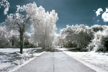 Near Infrared Photography in the Park.