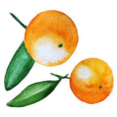 mandarin watercolor illustration isolated on white