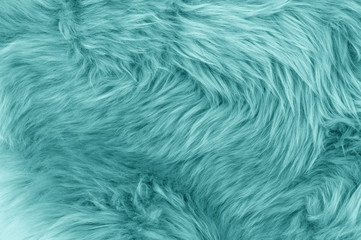 Turquoise blue sheepskin rug background