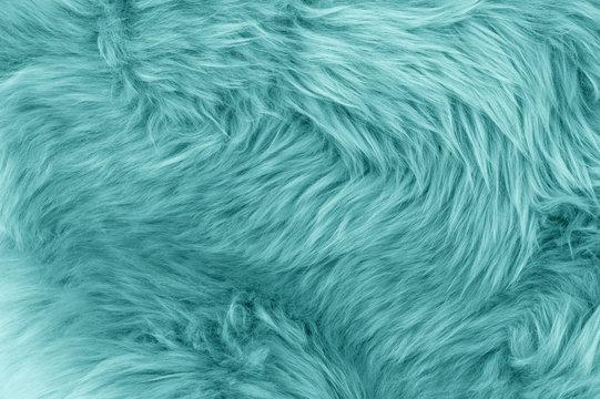 Turquoise blue sheepskin rug background
