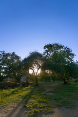 Silhouette of tree  in the beautiful moments during the sunset , at park Ayutthaya Thailand