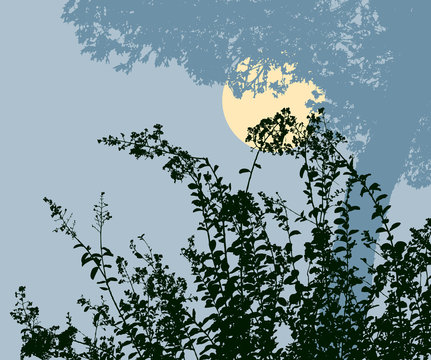 Silhouettes of the plants in the moonlit night