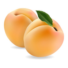 juicy apricot, delicious fruit on white background in realistic style. Vector illustration.