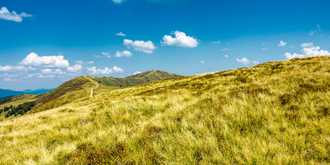 panorama of grassy mountain ridge. beautiful summer scenery in fine weather with some clouds on a blue sky