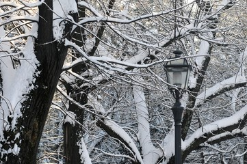 Winter season in Florence. Old lamp with snowy trees at the Piazzale Michelangelo. Italy Fotomurales