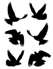Pigeon (Columba) in flight silhouettes set