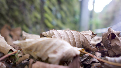 Focus on a single leaf fallen among a pile of autumnal leaves across a footpath
