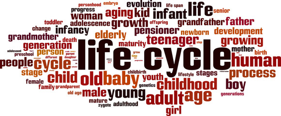 Life cycle word cloud