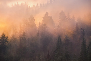 Foggy sunrise over a forest
