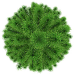 Christmas tree - fir top view - isolated on white