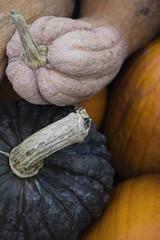 Background: pumpkins