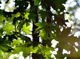 zielone liście drzew