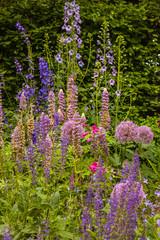 Beautiful Flowerbed in a Dublin Park