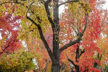Autumn in the Bay Area. Palo Alto, Santa Clara County, California, USA.