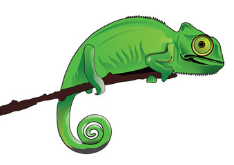 chameleon drawing illustration