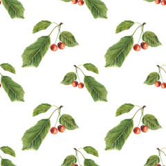 Berries and leaves cherry on white background. Watercolor hand made. Seamless colorful pattern