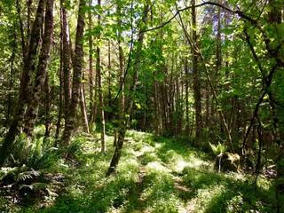 Sunny Forest Floor