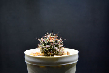 Cactus in the pot on background.
