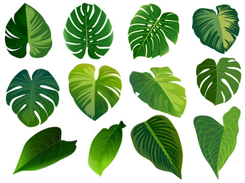 Summer, spring leaves set. Green flat icon. vector, Isolated on white