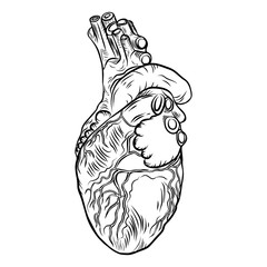 Anatomical heart on white background. hand drawn illustration concept of flesh tattoo. Vector.