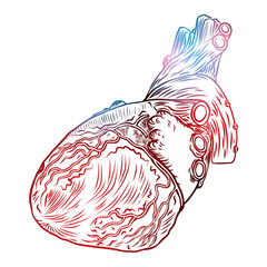 Isolated engraving colorful red blue flesh tattoo concept anatomical human heart on white background. Vector.