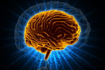 3d rendered  brain in colour background