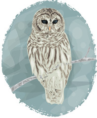 Owl hand drawn - Winter Card design