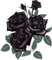 Black roses bouquet - Vector