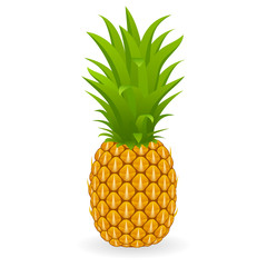 Vector illustration of pineapple isolated on white background