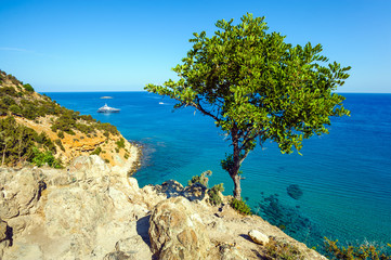 Tree against the sea, Akamas peninsula, Cyprus