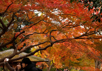 Visitors take a photo under autumn colour leaves at a park in Tokyo