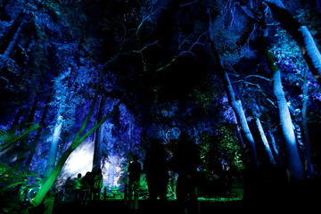 "Visitors walk through the installation ""Ancient Forest"" which is part of the exhibit ""Enchanted: Forest of Light"" at Descanso Gardens in La Canada Flintridge"