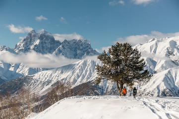 Scenic view of snowboard riders standing near the tree