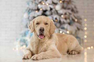 Golden retriever dog near christmas tree