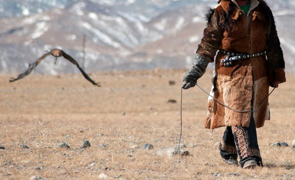 Golden eagle flying towards its trainer to catch a pray during the golden eagle festival in winter ulgi mongolia