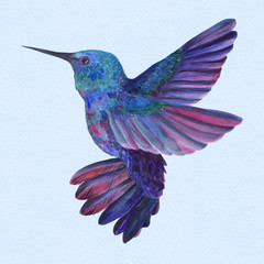Birds of hummingbirds. Drawing with watercolor. Wallpaper. Isolated.