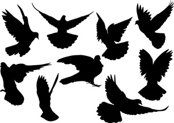 nine pigeon black isolated silhouettes