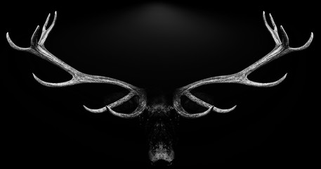 eer antlers 3d isolated black white background animal