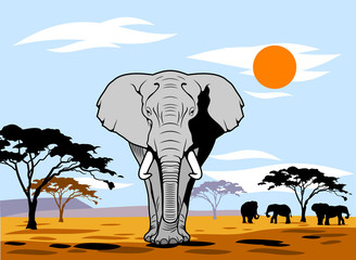 African landscape with an elephant