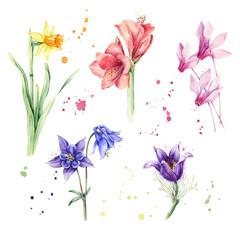 Watercolor flowers, floral botanical set