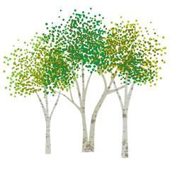 hand drawn aspen birch trees