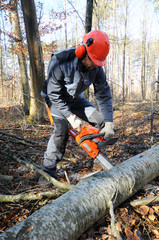 Holzfäller mit Motorsäge im Wald