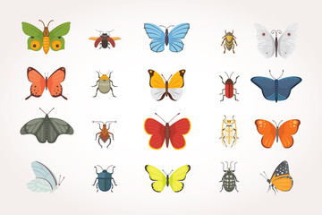 Set of different insects in cartoon style. Butterfly and beetle collection.