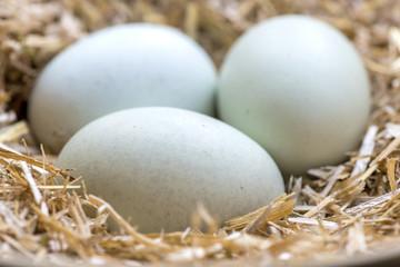 fresh blue eggs